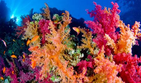 coral_120196_687_459-270_Images