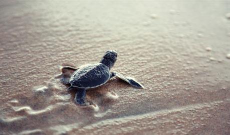 turtle_457x270_120195_698_459-270